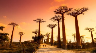 Treasures of the west and magic of southern madagascar