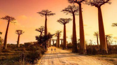 Trésors de l'Ouest et magie du Sud de Madagascar
